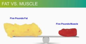 fat vs lean 5